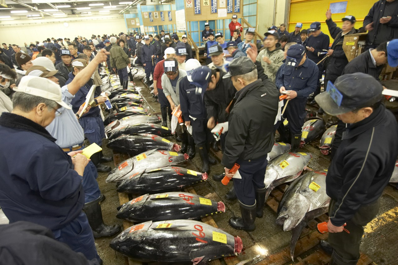 How to access to Tsukiji Market by Japan Rail Pass